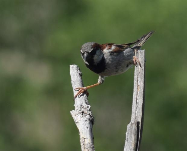 1a1bird